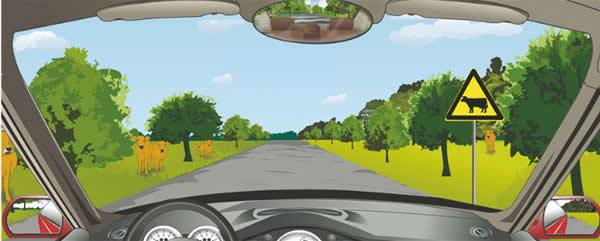 驾驶机动车看到这种标志需要注意什么?